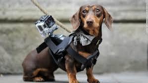 Собака - крепление GoPro